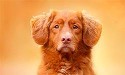 русские сериалы про собак
